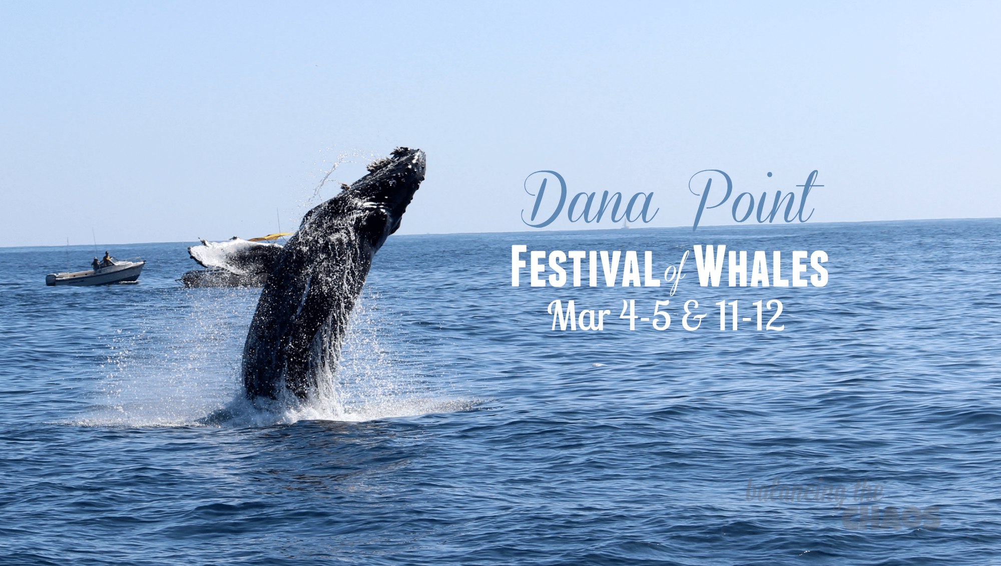 Dana Point Festival of Whales 2017 Whale Watching Dana Whales
