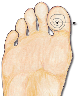 The pituitary reflexology point