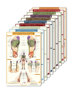 reflexology foot charts collection overview