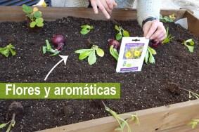 10 Flores y aromaticas