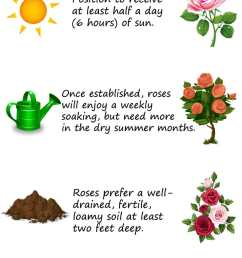30 diagrams to make you master in growing roses balcony garden web diagram of rose leaf [ 738 x 2526 Pixel ]