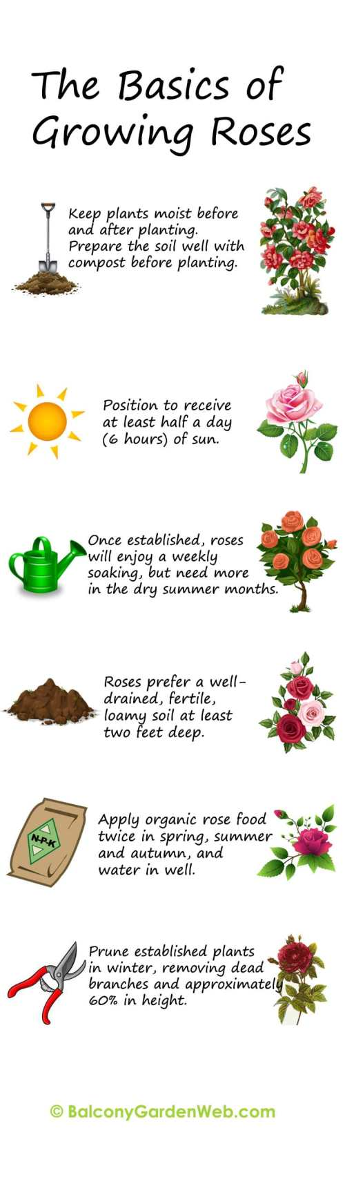 small resolution of 30 diagrams to make you master in growing roses balcony garden web diagram of rose leaf