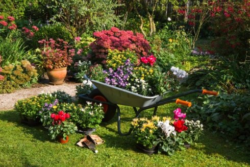 Image result for free gardening photos