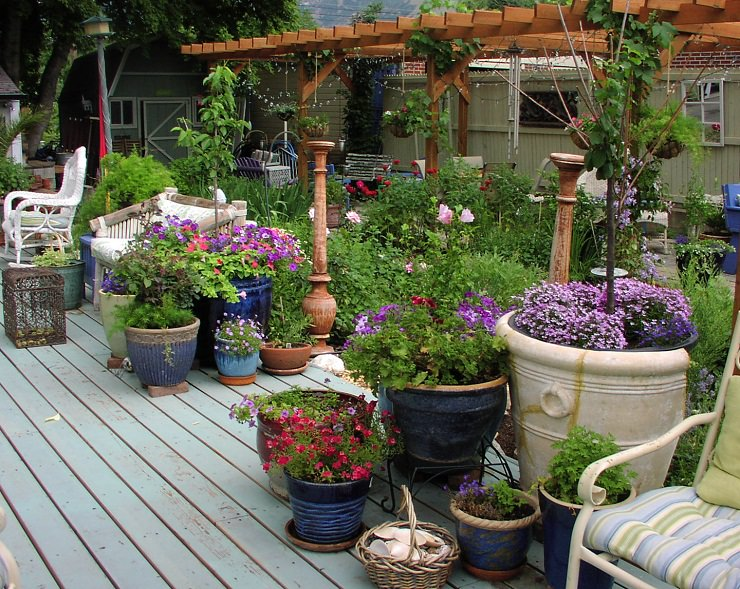 how not to kill plants in containers