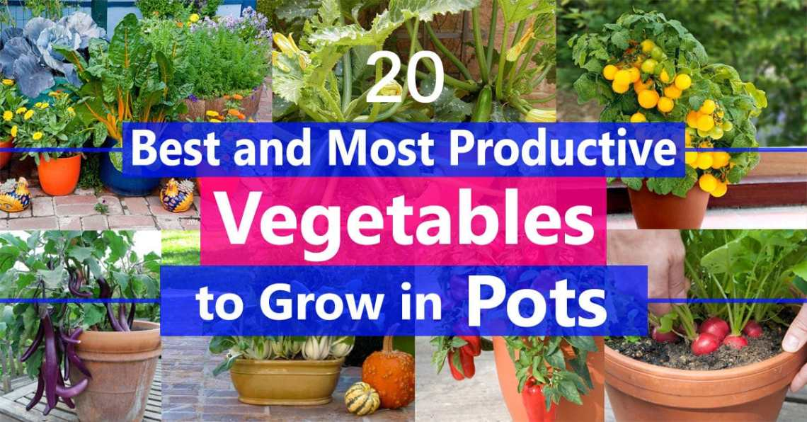 Best Vegetables To Grow In Pots Most Productive Vegetables For Containers Balcony Garden Web