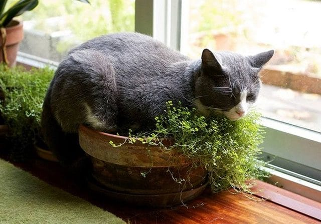 Edible Plants Cats