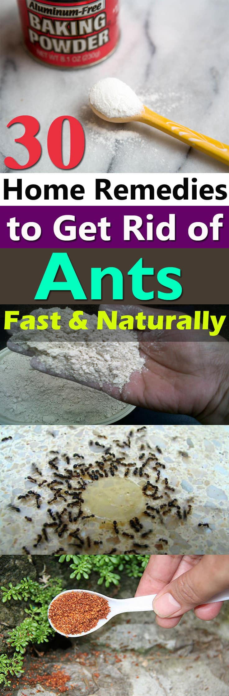 30 Natural Home Remedies To Get Rid Of Ants From Home Garden Balcony Garden Web