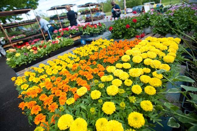 Garden Gift Ideas For Mother's Day Balcony Garden Web