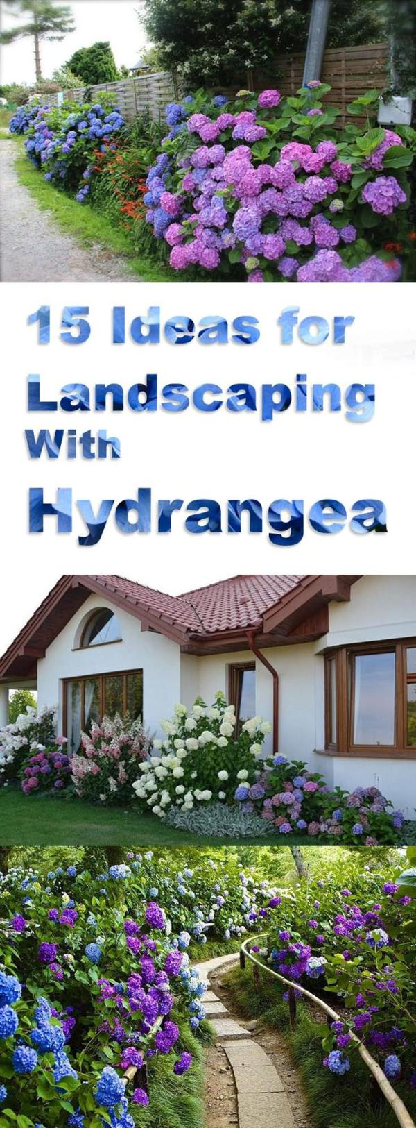 landscaping with hydrangeas 15