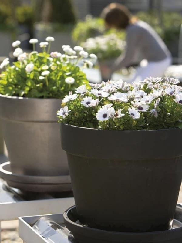Patio and Balcony Planter Ideas