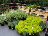 Roof Terrace Garden Plants   www.imgkid.com - The Image ...