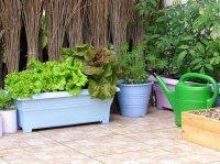 How to Make Terrace Vegetable Garden