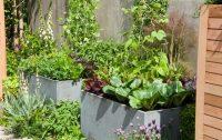 How to Make Kitchen Garden in Pots | Container Kitchen Garden