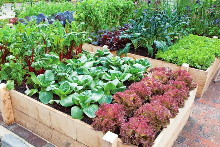Productive Vegetable Gardening Tips For Beginners