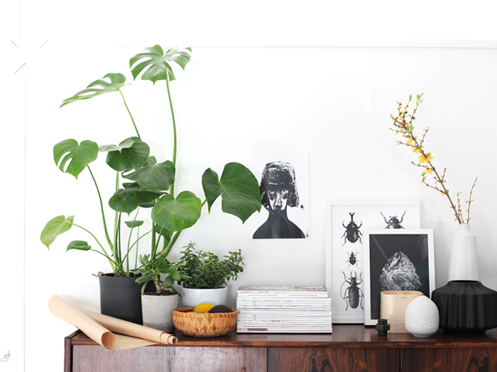 99 Great Ideas To Display Houseplants Indoor Plants