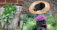 11 Craziest Things To Do With Tree Stump  Best Carpentry ...