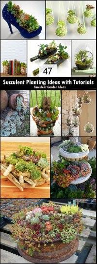 47 Succulent Planting Ideas with Tutorials