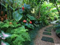 14 Cold Hardy Tropical Plants to Create a Tropical Garden ...