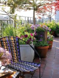 10 Tips to Start a Balcony Flower Garden | Balcony Garden ...
