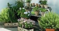 7 Apartment Herb Garden Tips | Apartment Gardening ...