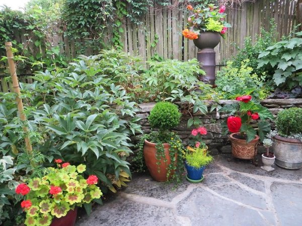 essential container garden