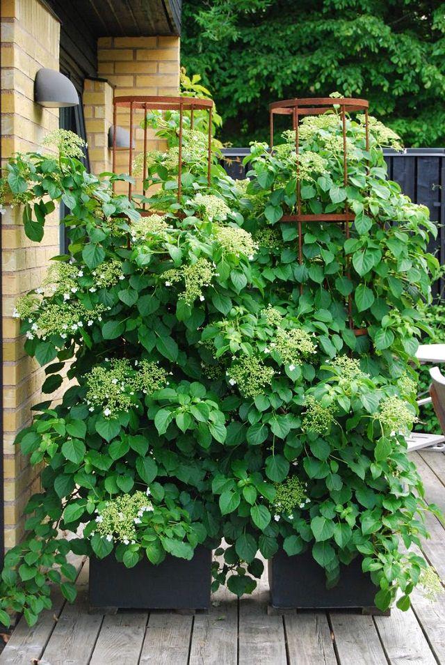 Garden Planters Trellis