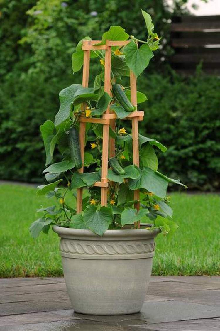 15 Stunning Container Vegetable Garden Design Ideas & Tips