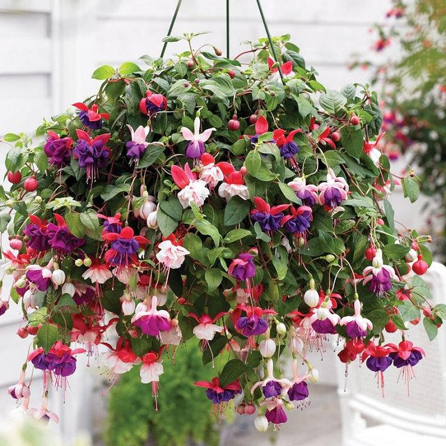 Decorative Indoor Hanging Baskets