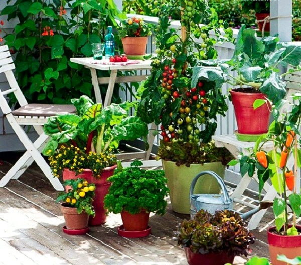 Kitchen Garden Plants Pots
