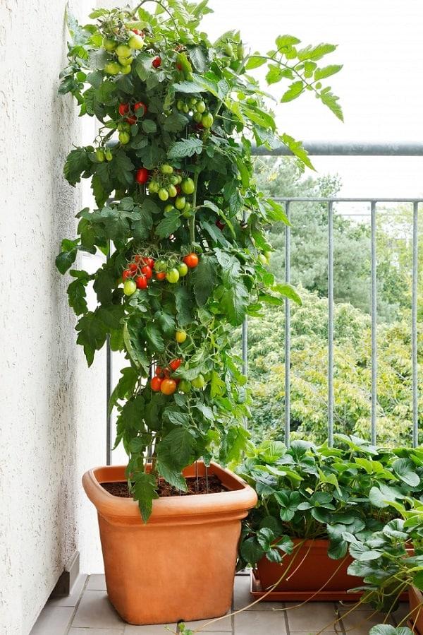 Best Garden Design Tips