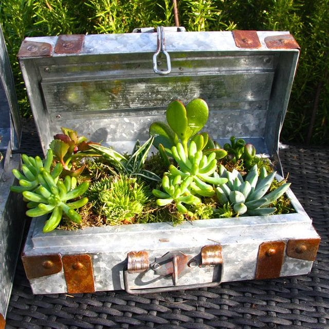 10 Creative And Trendy Container Garden Ideas You'll Love To