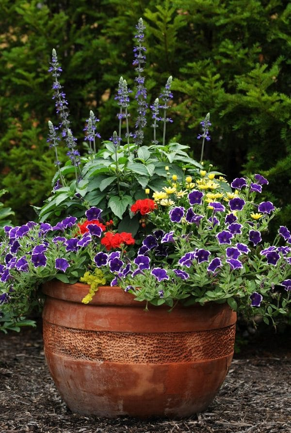 Large Patio Containers