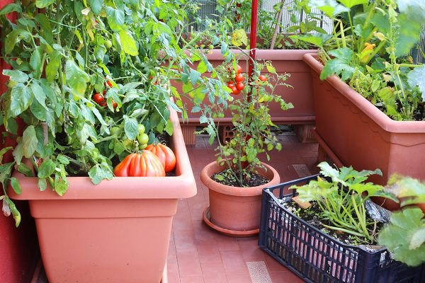Growing Vegetables Containers