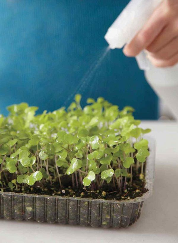 Everything About Growing Microgreens: Best Microgreens To ...