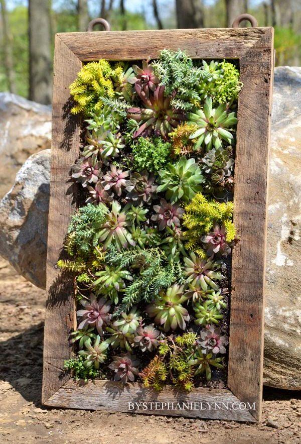 Succulent Plants Cheap