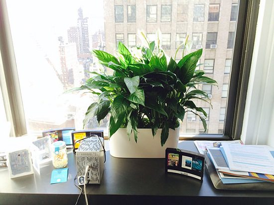 15 Best Office Desk Plants That Dont Need Space  Balcony