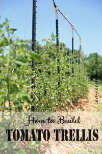 18 DIY Tomato Cage And Stake Ideas | Balcony Garden Web