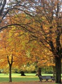 autumn-4