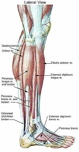 Post Injury Analysis & Treatment (2/2)