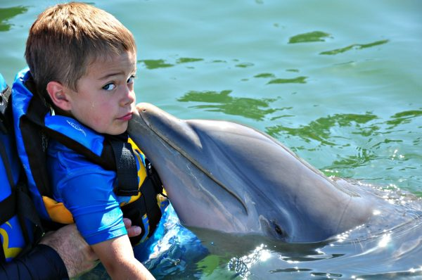 Dolphin Discovery Timmy and dolphin