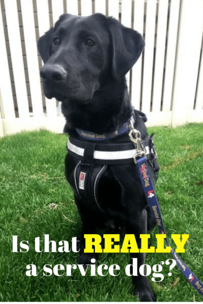 Duke service animal pinterest