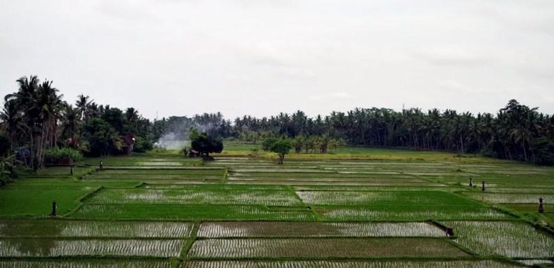 Cerita Lalu: Bali, 1994
