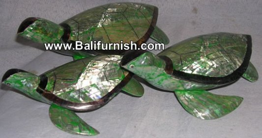 turtle shell carvings