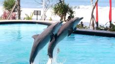 bali, adventure, wake adventure, bali wake adventure, activities, dolphin, swimming, swim with dolphin, dolphin watching