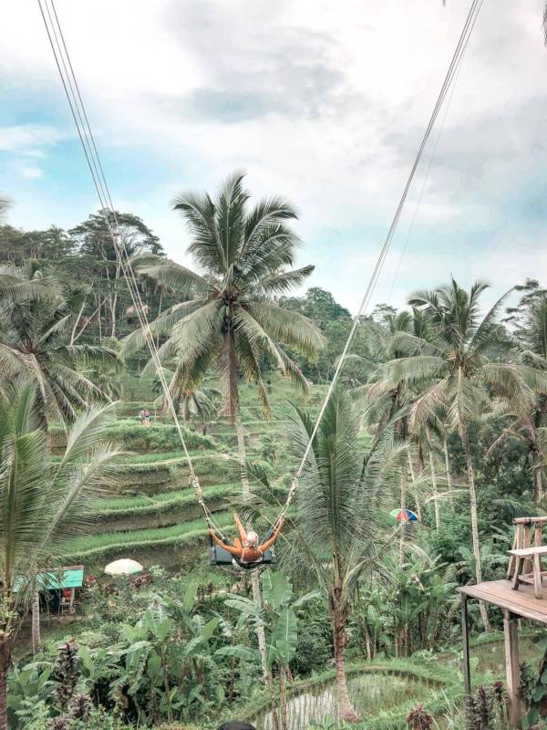 Ubud Discovery Tour: Waterfalls, Rice Terraces & Famous Bali Swing