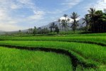 landscape-603950_1920