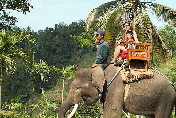 Elephant Riding & Trekking