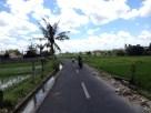 Rice Field View