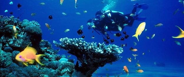 Bali Scuba Diving Tours