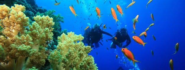 Bali Dive Course, Bali Diving Tour - Bali Scuba Diving Tours